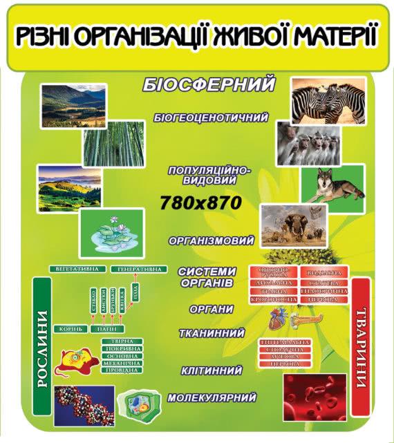Стенд по Биологии зеленый фото 41897