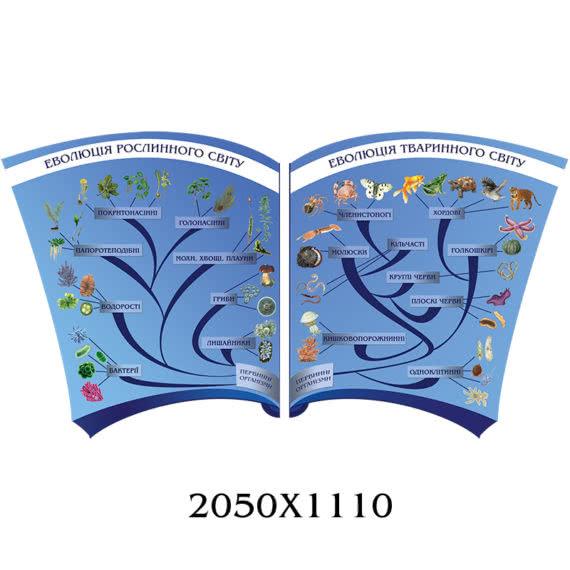 Еволюція рослинного і тваринного світу
