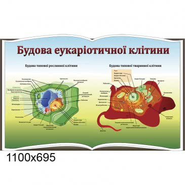 Стенд «Строение клетки» книга
